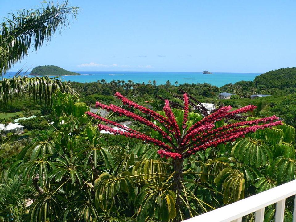 Vue Bungalow Caraïbes Bonheur