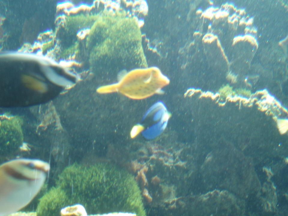 """das aquarium mit einen kofferfisch"""" eurothermenresort bad, Hause ideen"""