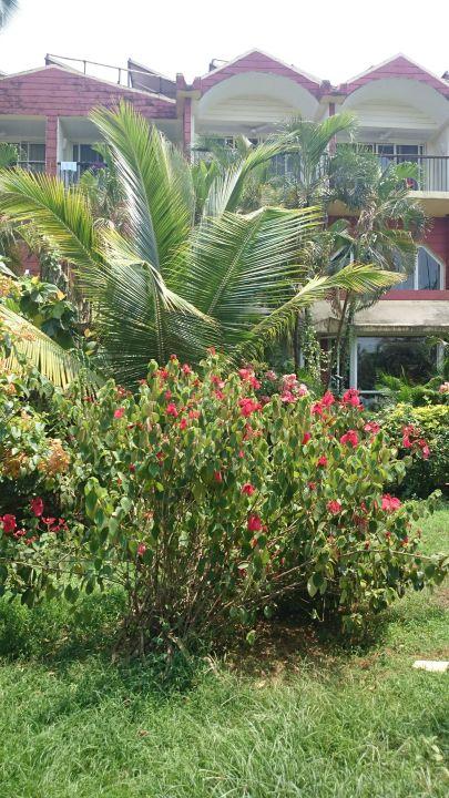 Вид на отель из сада Hotel Majorda Beach Resort