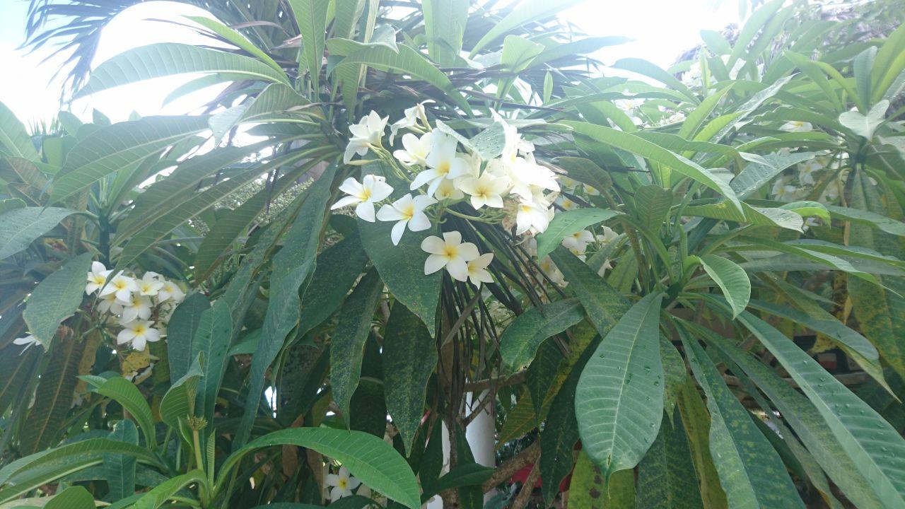 Gartenanlage Cofresi Palm Beach & Spa Resort