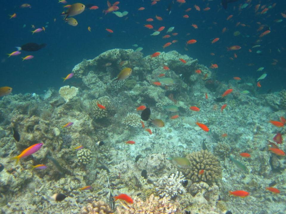 Fische Hausriff Filitheyo Island Resort