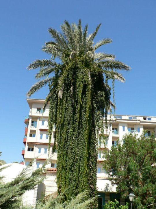 Alter Baumbestand Belconti Resort Hotel