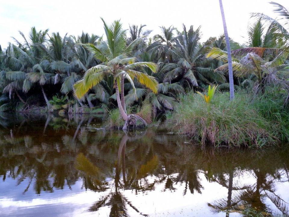 Teichanlage neben dem Hotel Hotel Grand Paradise Samana