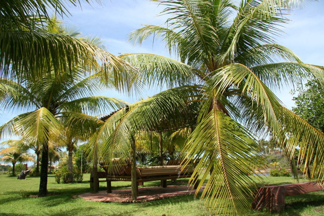 Palmen, soweit das Auge reicht Hotel Estrela do Mar Resort