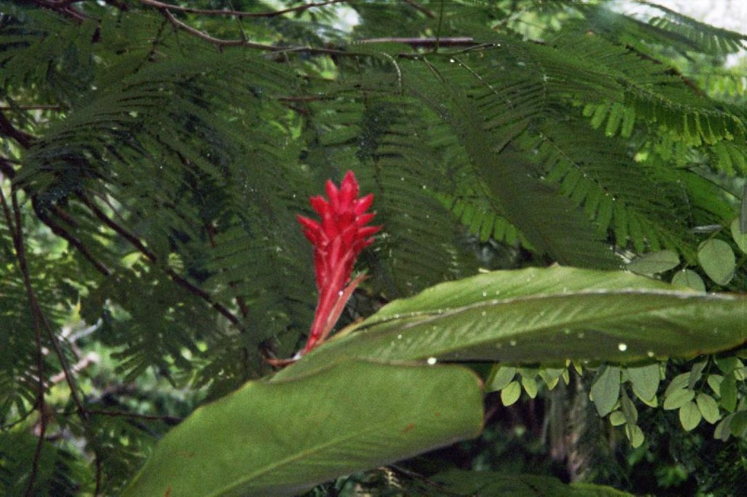 Vegetation in der Gartenanlage Hotel Las Palapas