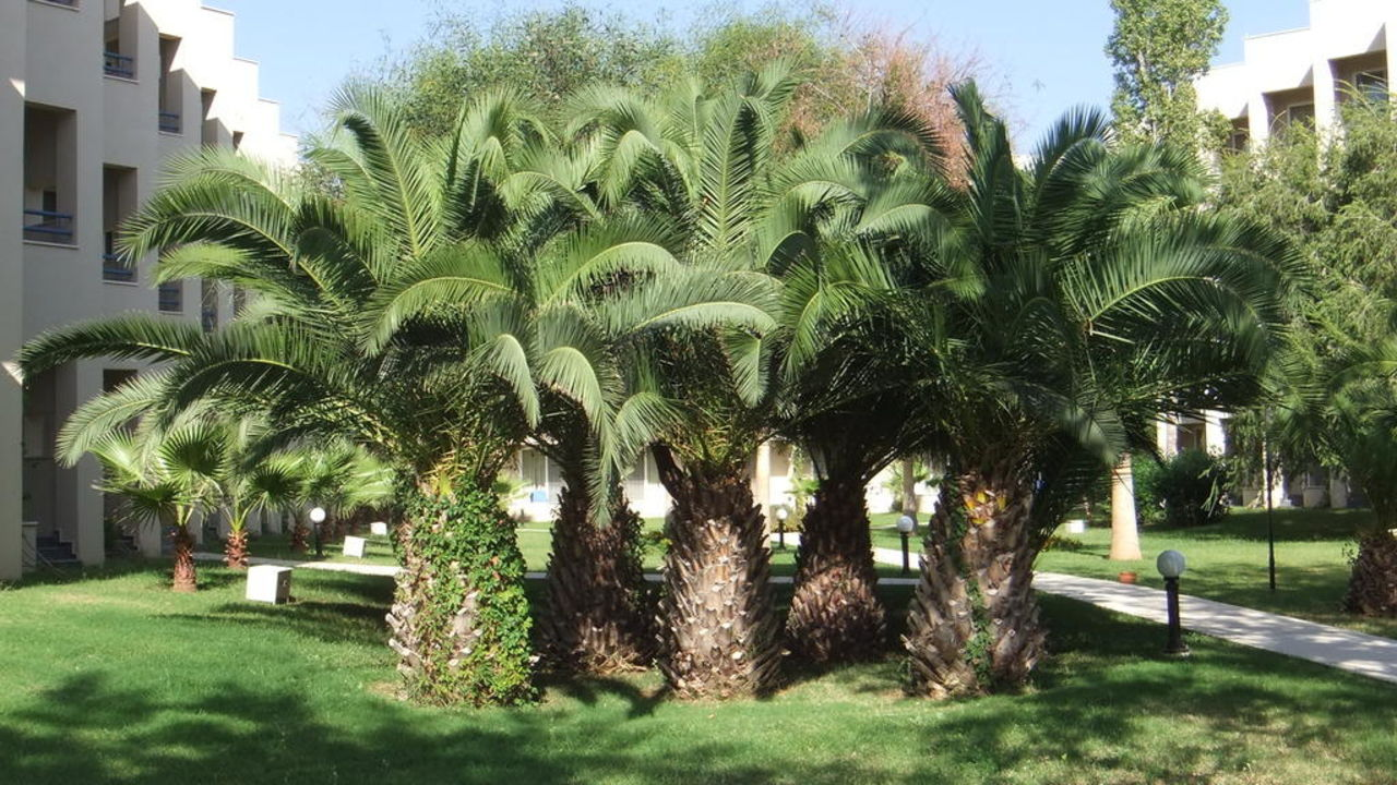 Palmengruppe LABRANDA Alantur Resort