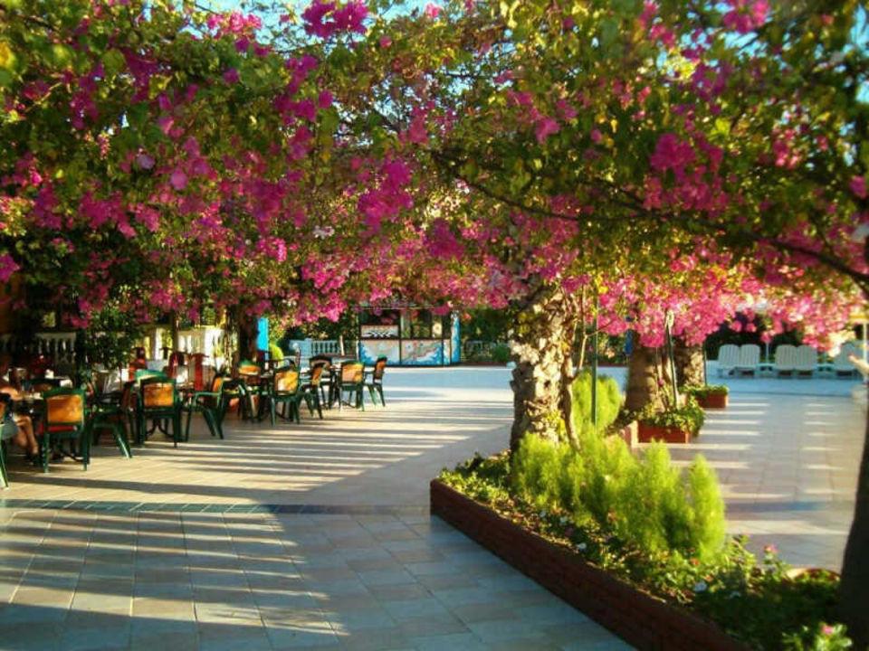 Hotel Riva Atli Bay Hotel Maksim Atli Bay