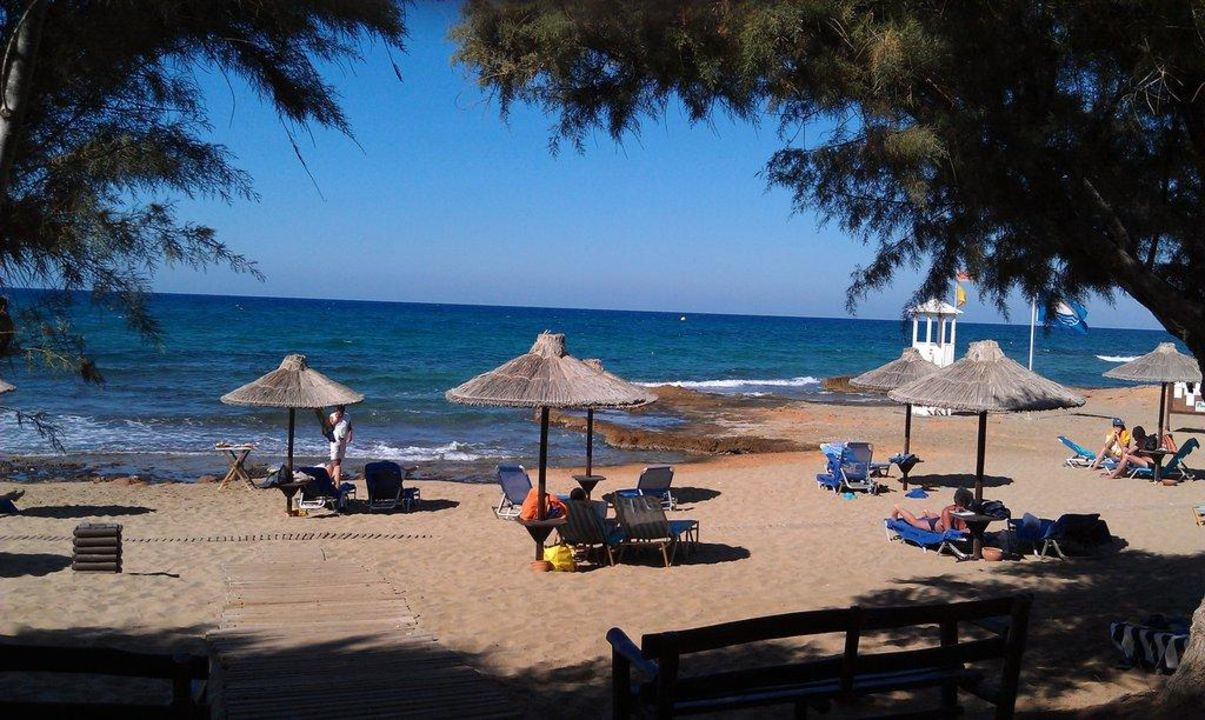 Strand Des Hotels Hotel Cretan Malia Park Malia Holidaycheck