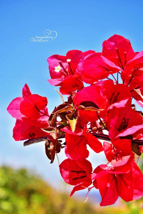 Tolle Blumen Radisson Blu Beach Resort Milatos Holidaycheck