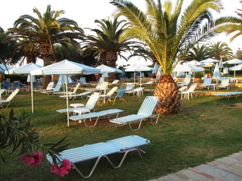 Einfach gemütlich unter den Palmen Hotel Creta Star