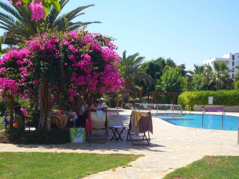 Schattige Sitzplätze am Pool Hotel Alion Beach