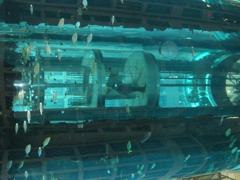 aquarium mit sea life aufzug innen radisson blu hotel berlin berlin mitte holidaycheck. Black Bedroom Furniture Sets. Home Design Ideas