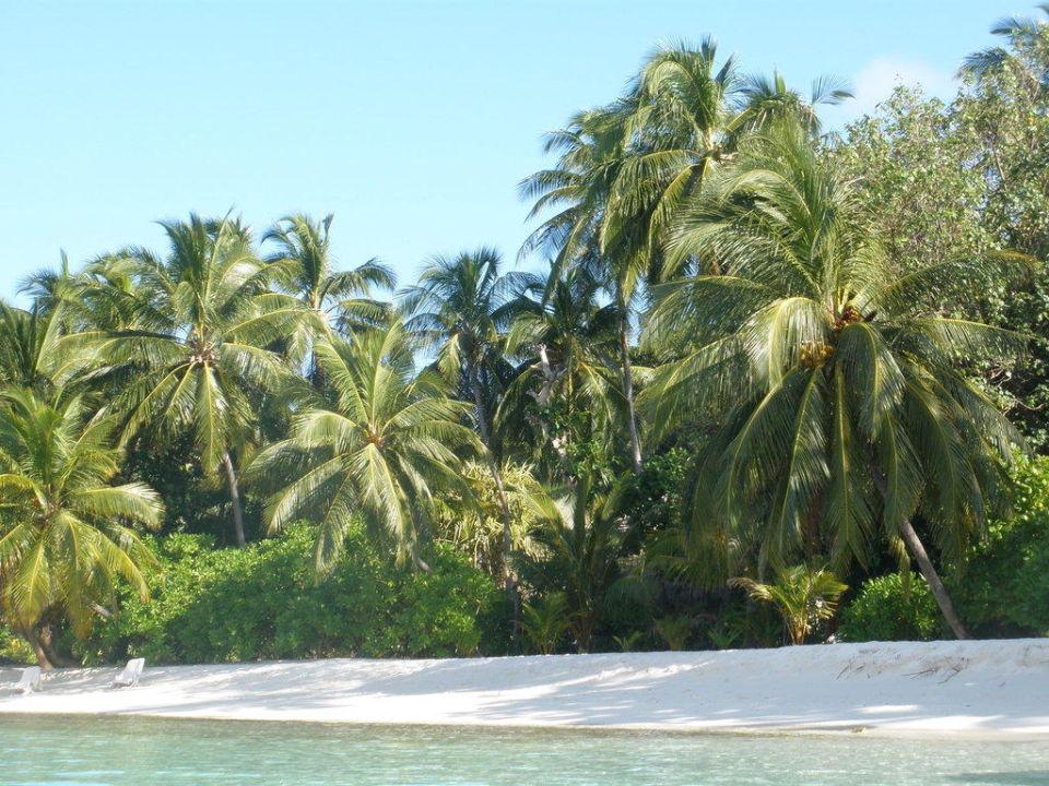 Traumstrand Kuramathi Maldives