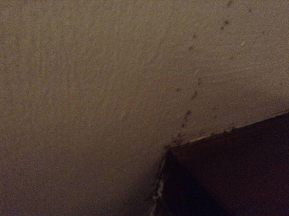 Ameisen kommen neben bett aus der wand spazierend hotel jetwing sea negombo holidaycheck - Ameisen in der wand ...
