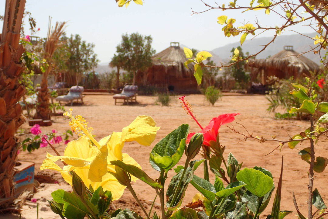 Bungalows surrounded by flowers and trees Bedouin Star Bungalows