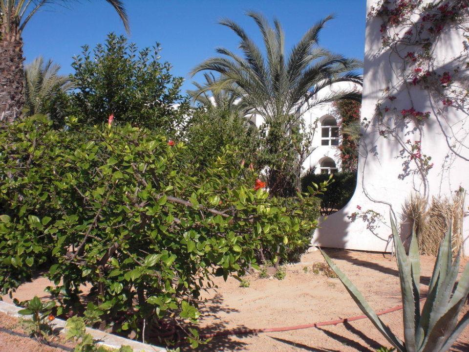 Innenanlage Hotel Seabel Rym Beach Djerba