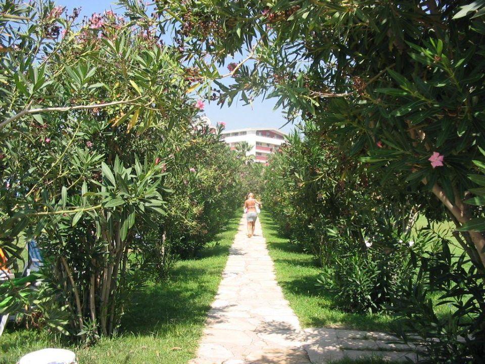 Weg durch den tollen Garten zum Strand Hane Hotel