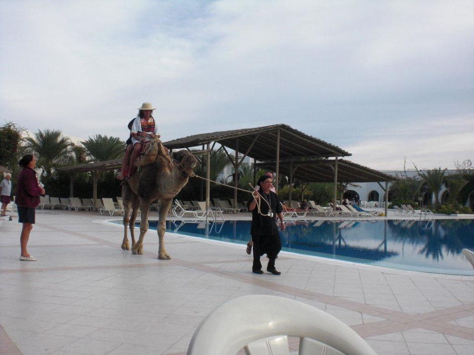 Das Kamel am Pool Hotel Seabel Rym Beach Djerba