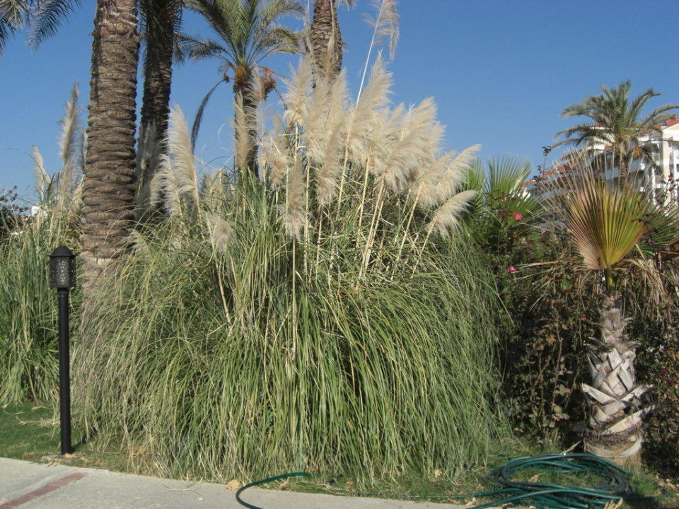 Garten Trendy Aspendos Beach Hotel