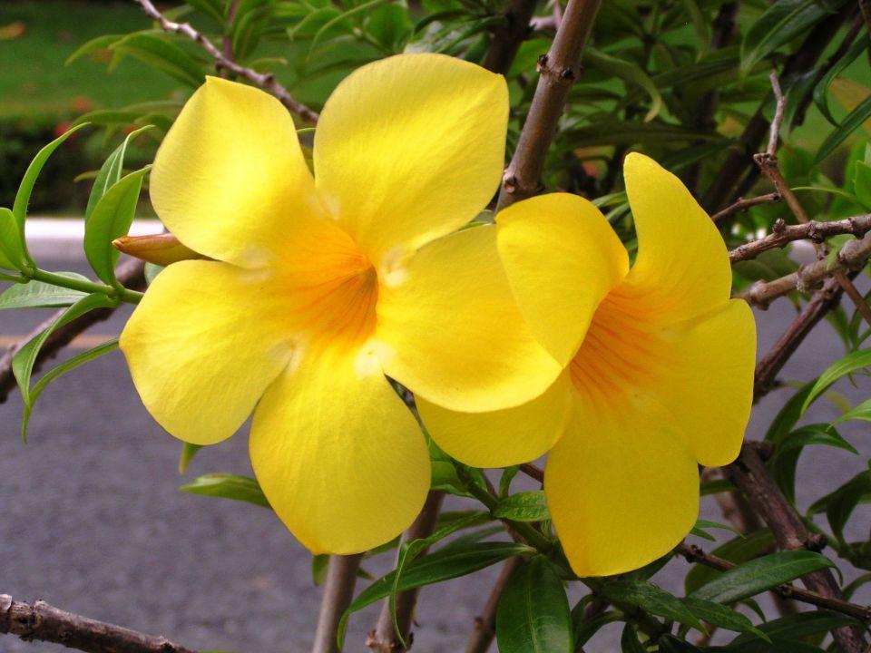 Tolle Blumen überall Melia Caribe Tropical Bavaro Holidaycheck