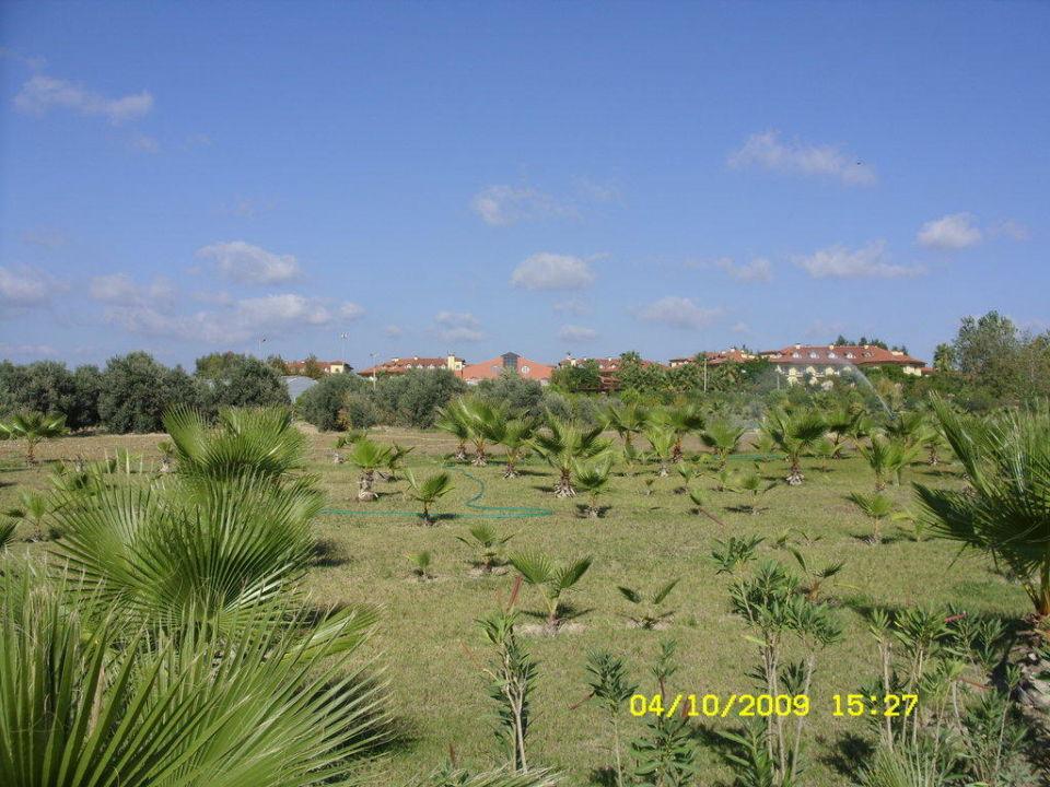 Weitläufige Anlage Hotel Alba Resort