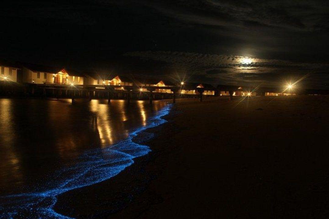 Leuchtendes Plankton