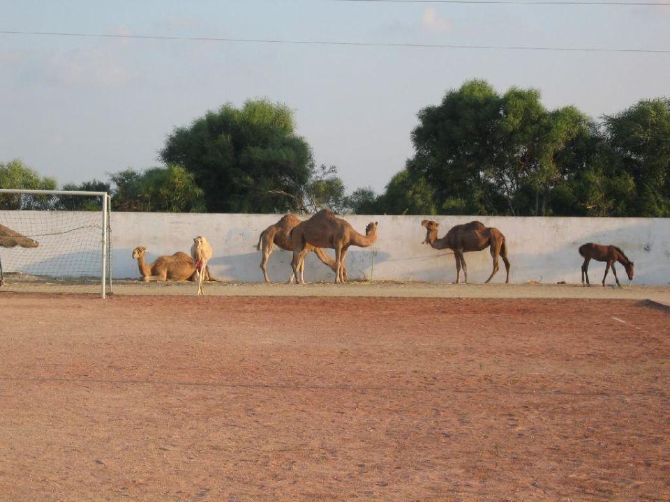 Kamele Hotel Club Acquaviva