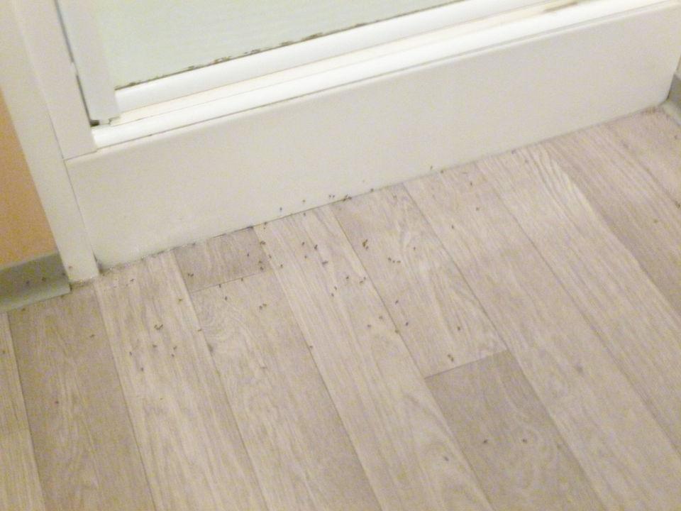 Ameisen im Badezimmer\