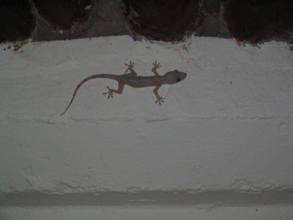 Gecko im Zimmer Baobab Beach Resort & Spa