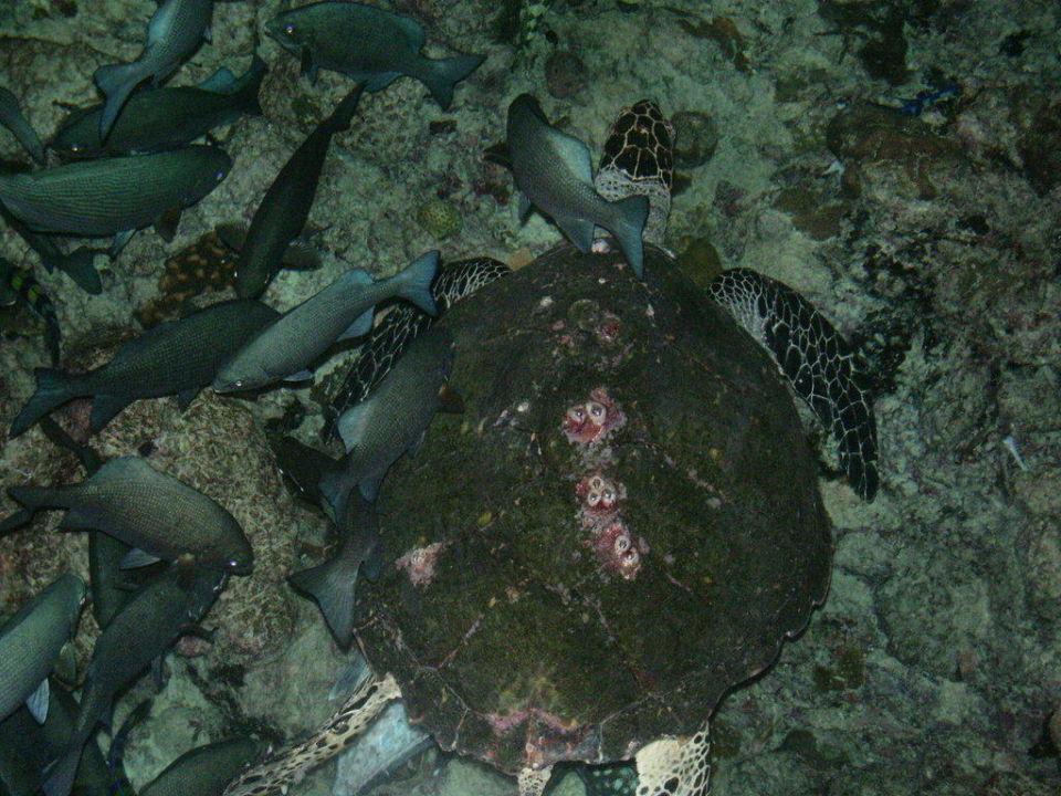 Unter Wasser Adaaran Select Meedhupparu Island Resort