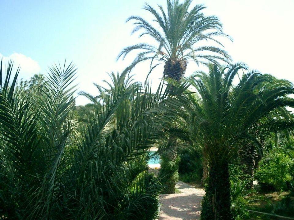 Palmengarten Hotel Mediteranée