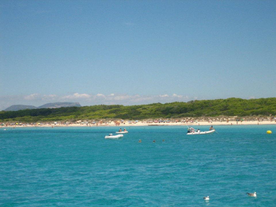 Plaża AluaSun Torrenova