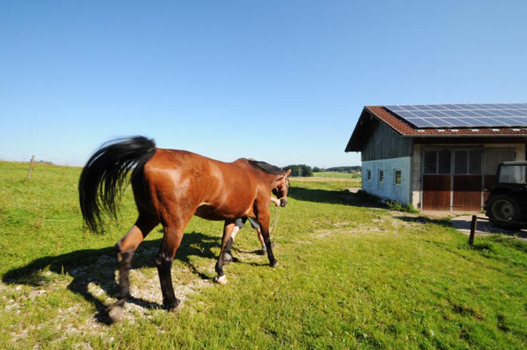 Am Bauernhof in Ising sind viele Pferde zuhause. Wimmerhof Ising