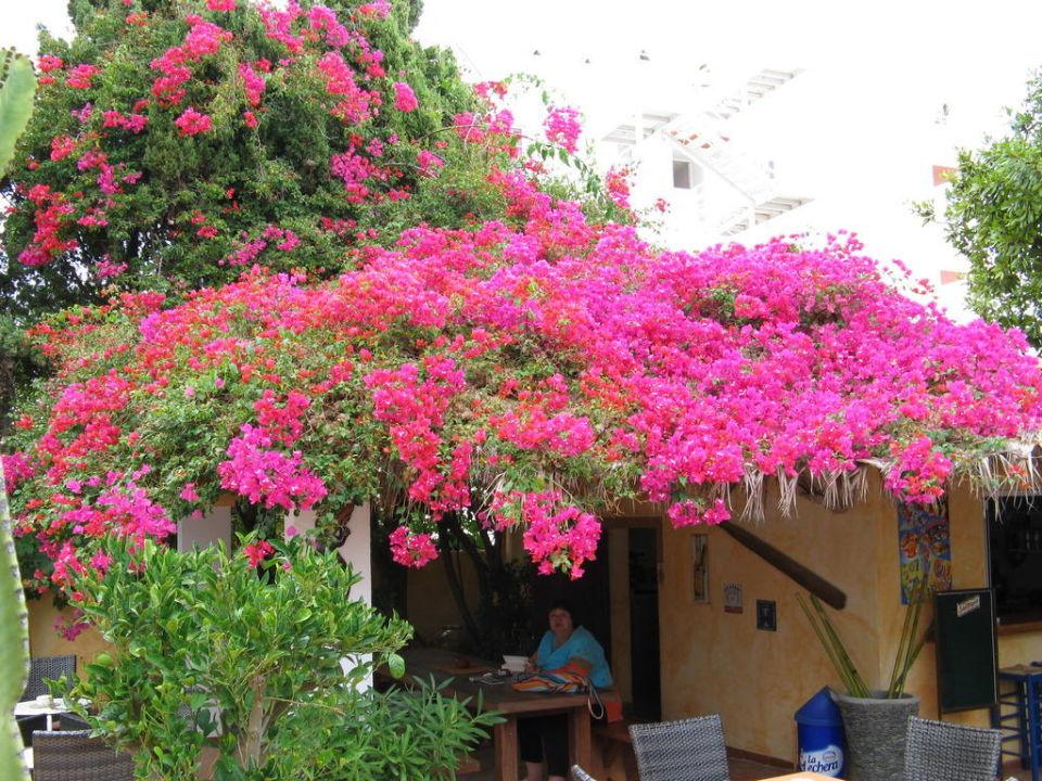 Nette Bar Hotel Casa Pepe