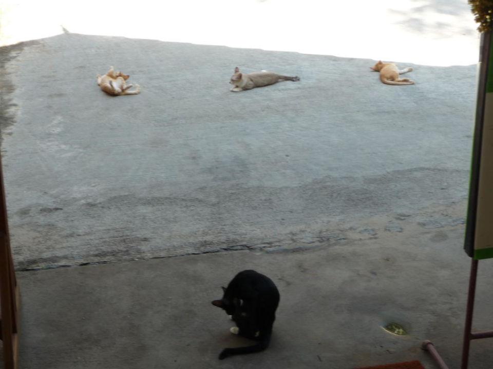 Katzenfamilie im Restaurant Hotel First Bungalow Beach Resort