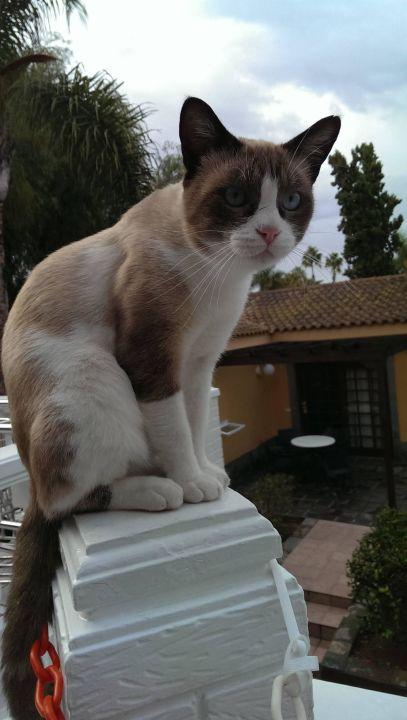 Die liebenswerten Katzen vom Hotel Maspalomas Resort by Dunas