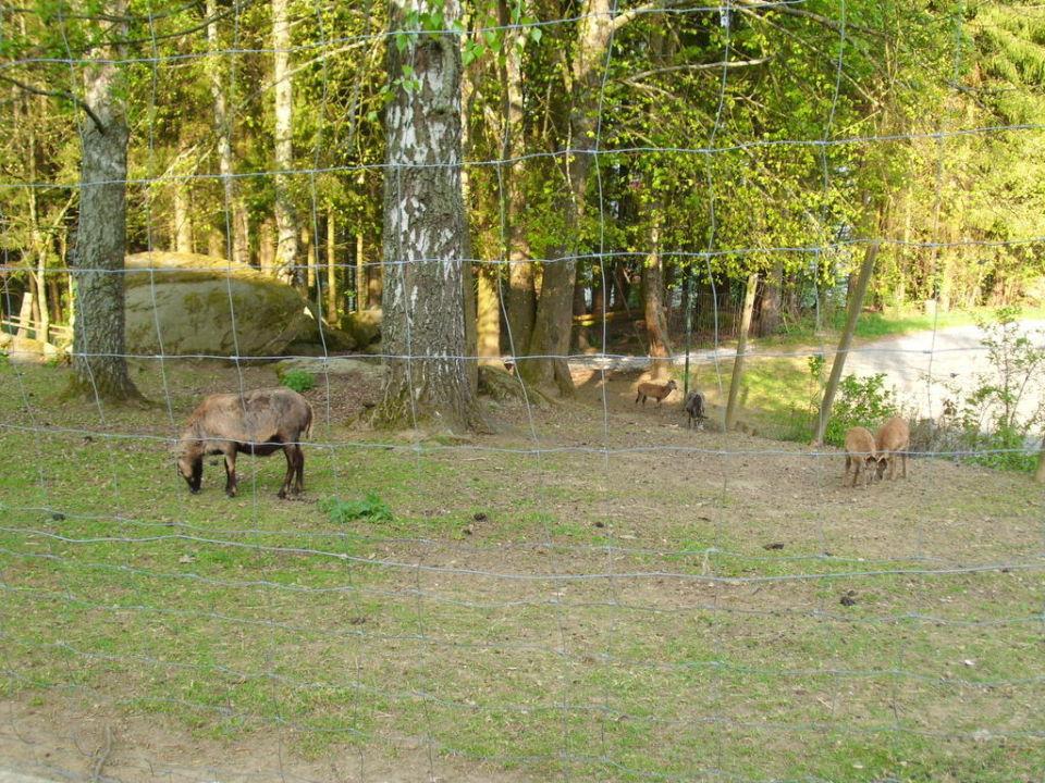 Tiergehege Ferienpark Bischofsmais