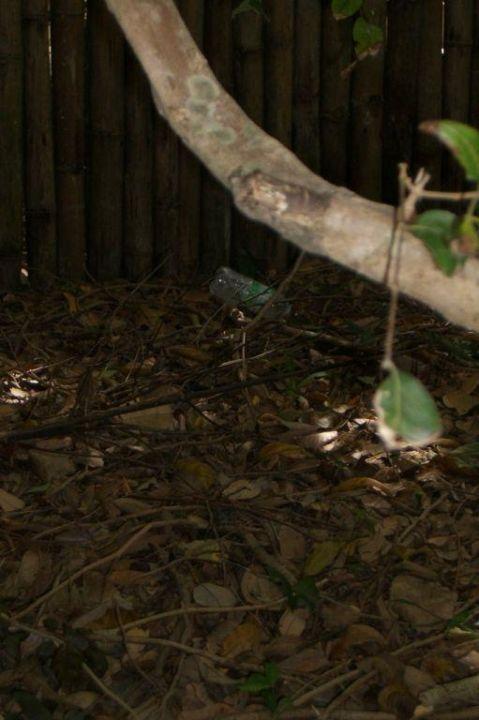 Müll in unserem Garten Hotel Six Senses Ninh Van Bay