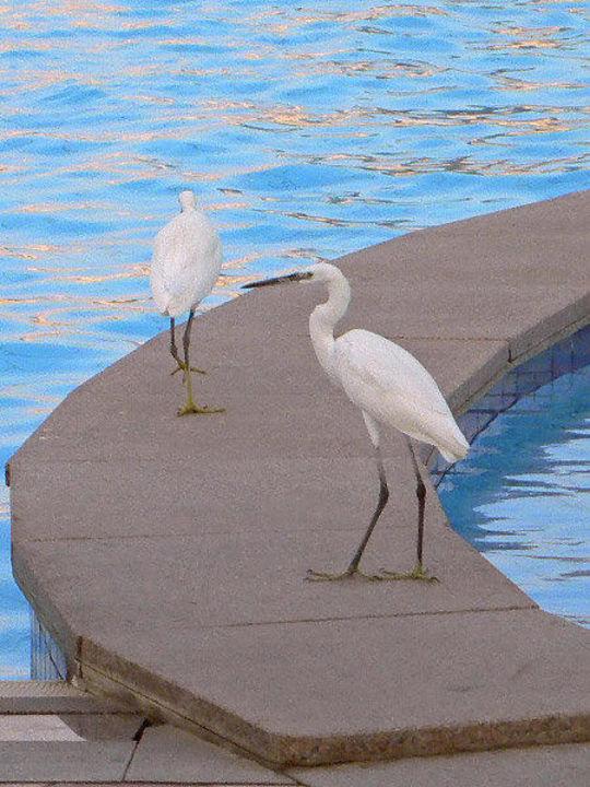 Kraniche am Pool Dana Beach Resort