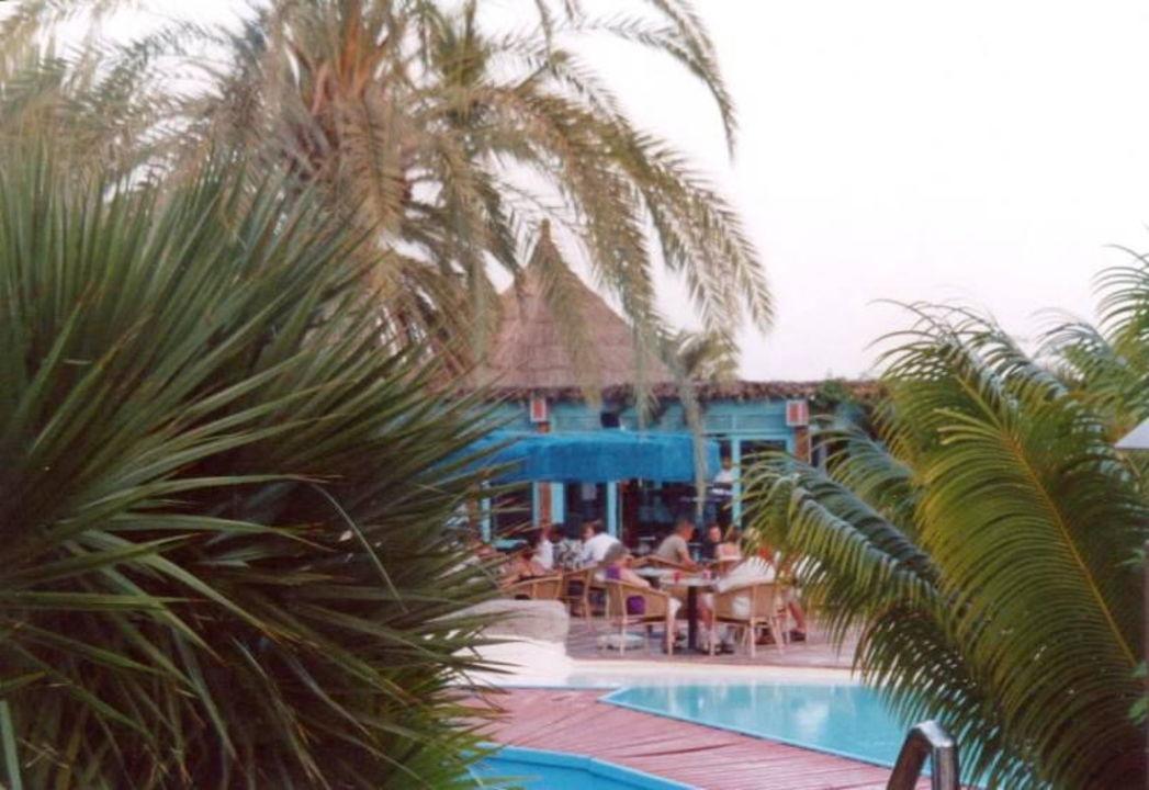 IFA BEACH HOTEL Poolarea mit Palmen Corallium Beach by Lopesan Hotels