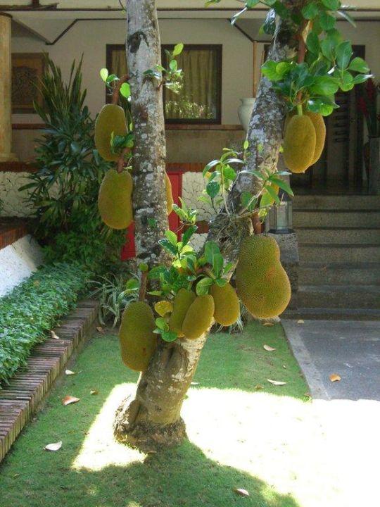 Jackfruitbaum Sol Beach House Benoa Bali All Inclusive By Melia Hotels International