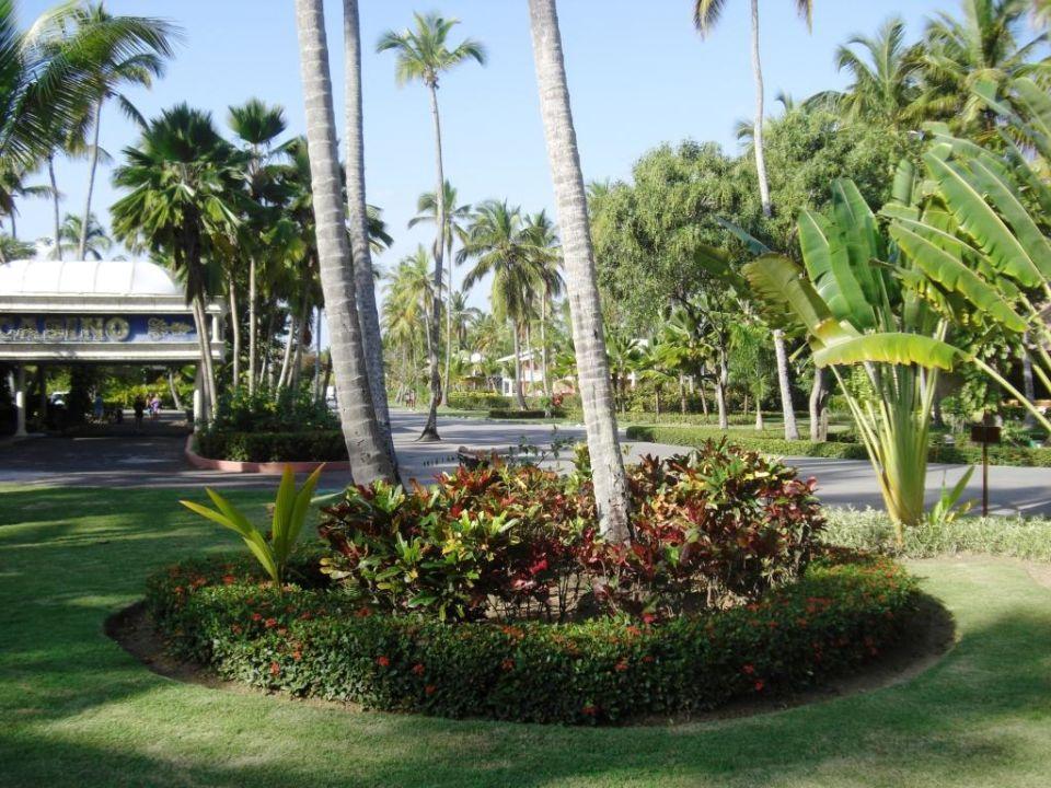 Gartenanlage vor meinem Zimmer Hotel Grand Palladium Palace Resort, Spa & Casino