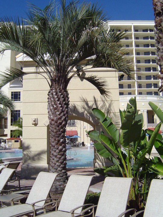 Palme am Pool Hotel Parc Soleil by Hilton Grand Vacations Club