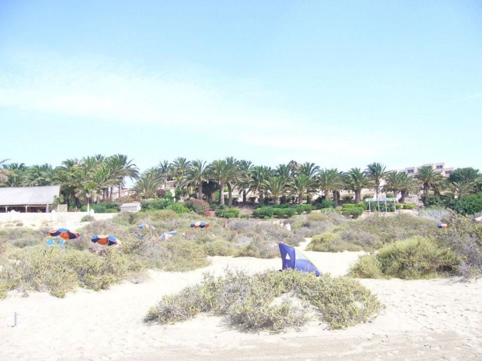 Die Hotelanlage vom Strand aus SBH Monica Beach Resort