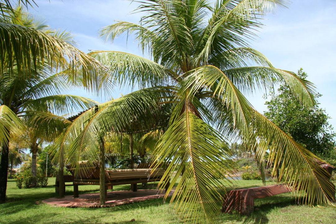 Kokospalmen überall Hotel Estrela do Mar Resort