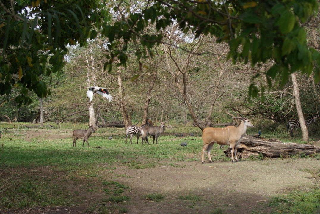 Sicht auf den Tierpark vom Garten aus Hotel Mount Meru Game Lodge