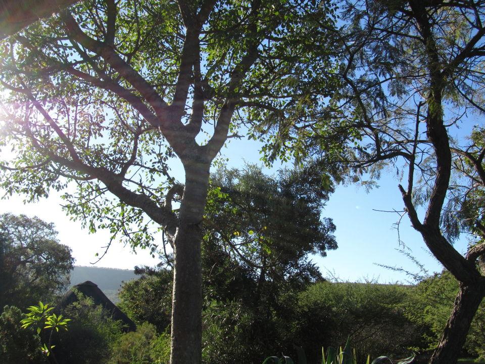 Guten Morgen Afrika Hotel Iketla Lodge Limpopo