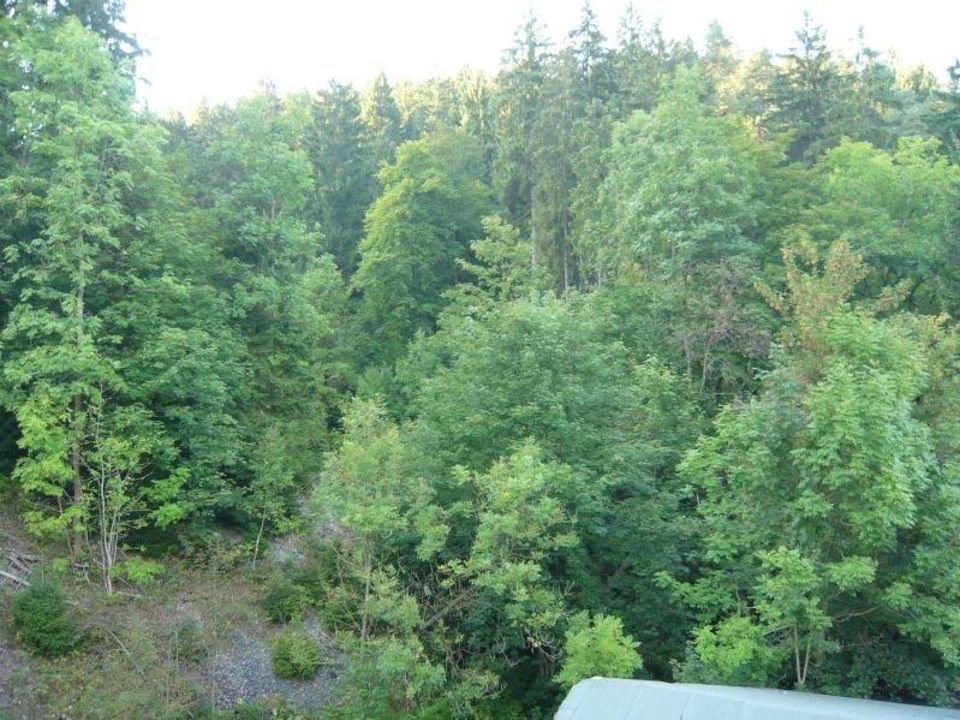 Aussicht vom Balkon direkt ins Grüne Ferienwohnungen Antik