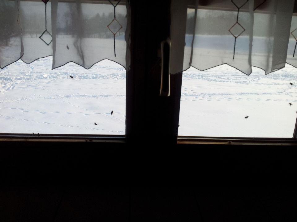 Bild die fensterbrett deko ein traum zu bauernhof - Fensterbrett deko ...