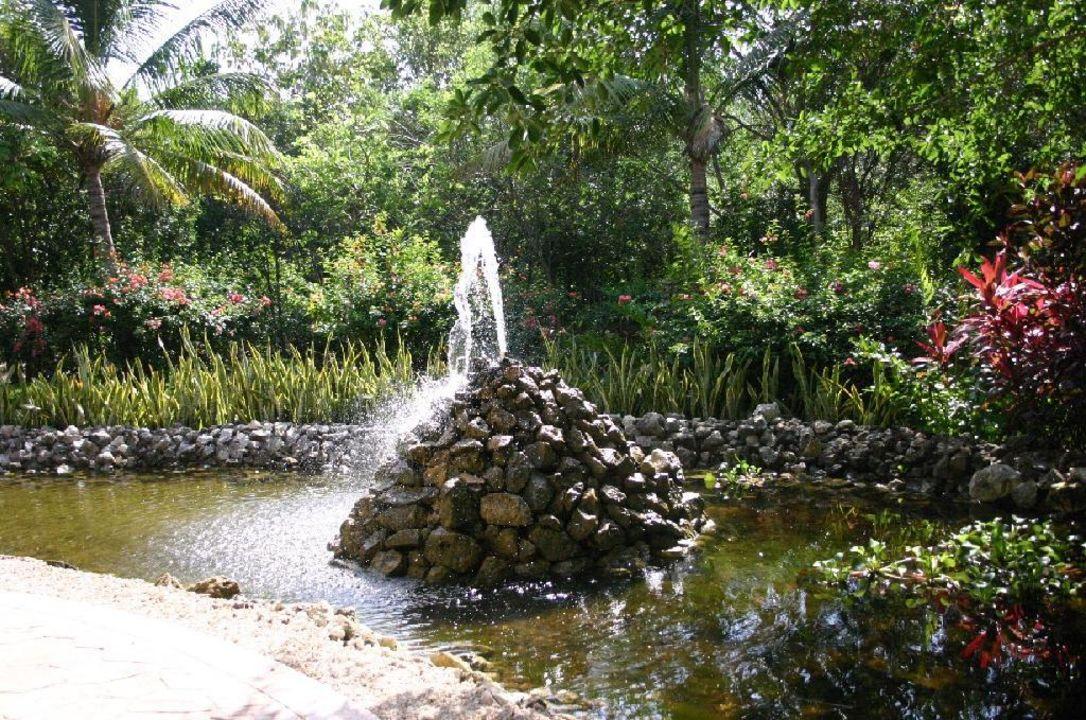 Im tropischen Garten des Iberostar Paraiso Beach IBEROSTAR Hotel Paraiso Beach